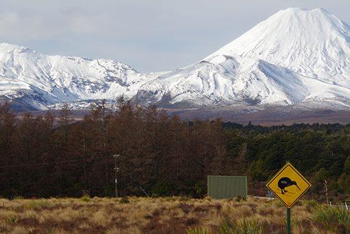 Leren van de eerstelijnszorg in Nieuw-Zeeland